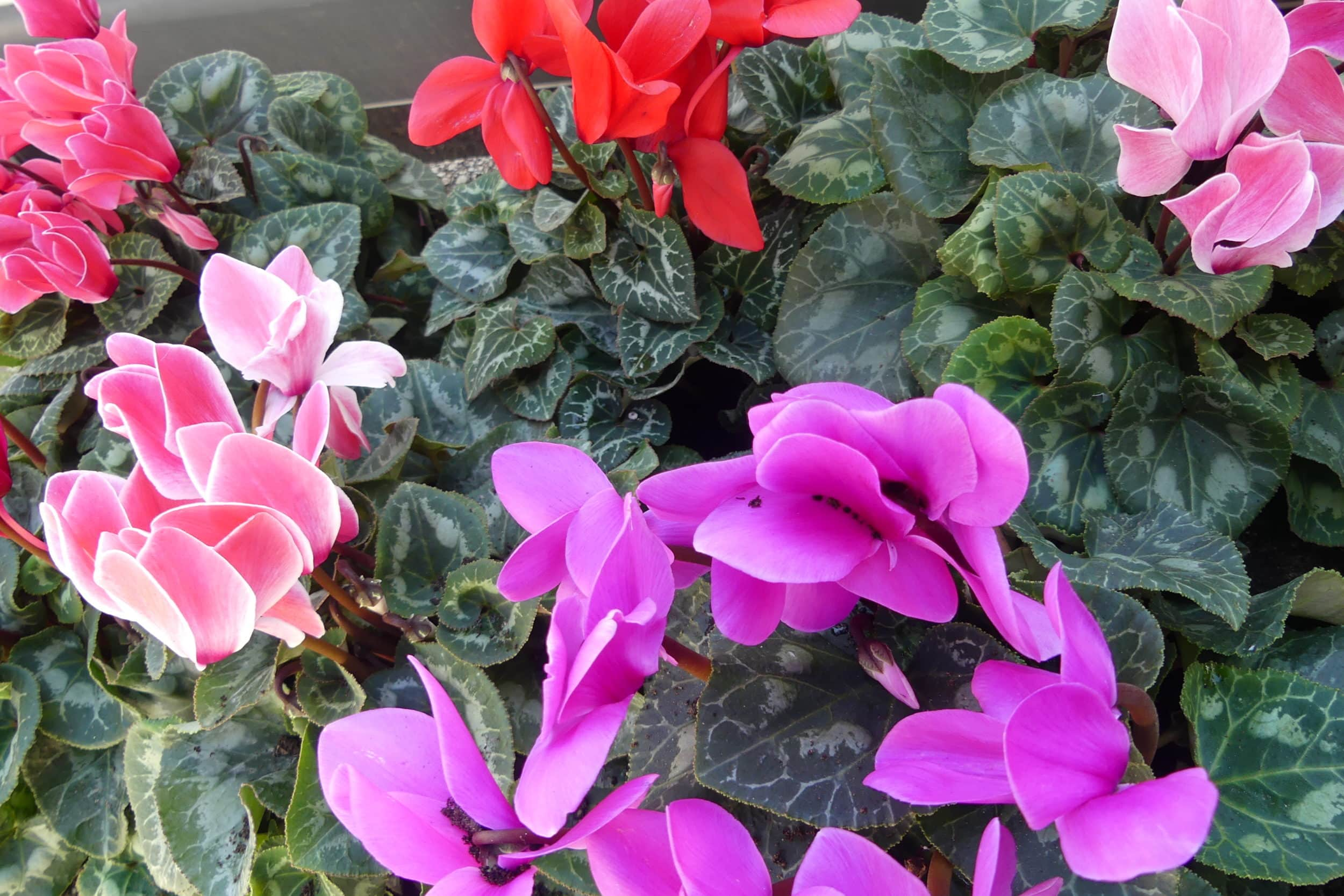 Des fleurs en hiver pour réchauffer les coeurs